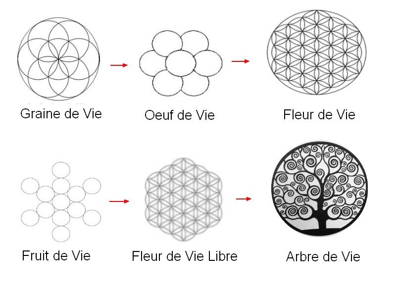 symboles fleur de vie, arbre de vie graine de vie oeuf de vie